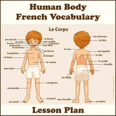 A lesson plan to learn the body parts in french. Free online tutorials and activities for kids to learn french vocabulary for parts of the human body. Free French Lessons, French Language Lessons, French Language Learning, Foreign Language, Learning French For Kids, Ways Of Learning, Teaching French, French Body Parts, Learn To Speak French