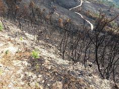 Incendies. Nord du Portugal 2013