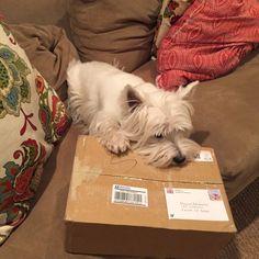 bon, c'est pour qui ce paquet? pour moi? C'est Noël après tout!