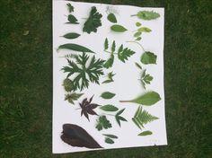 Leaf Art with green