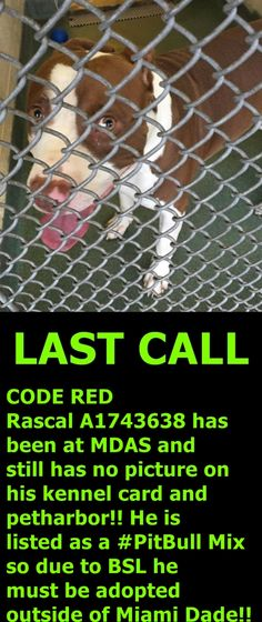 1/24 STILL WAITING!! Please help us #SaveRascal!! #Miami Dade Animal Services is located at 7401 NW 74th St, Miami, #Florida 33166 and is open weekdays from 10am-6:30pm and weekends from 10am-4pm Our shelter is extremely over crowded so please act fast! https://www.facebook.com/urgentdogsofmiami/photos/pb.191859757515102.-2207520000.1452284820./1105627382804997/?type=3&theater