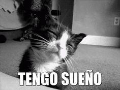 ¡Hoy es miáucoles! Esta semana el gatito dice: Tengo sueño.