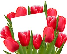 Transparent Red Tulips Decoration Clipart Picture - Museum Of Champions Mother's Day Party Gift PNG - indira gandhi memorial tulip garden, cut flowers, floral design, floristry, flower Borders For Paper, Borders And Frames, Flower Frame, Flower Art, Floral Frames, Share Pictures, Happy Birthday Flower, Animated Gifs, Birthday Frames