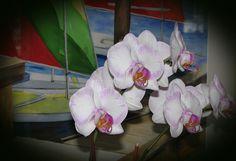 Orchids Lesson 8