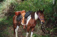 riding black horse - Google Search