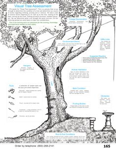 Visual Tree Assessment for arborists, homeowners, landscapers, etc. from WesSpur Tree Equipment Arborist Catalog