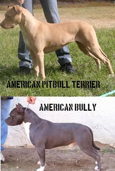 dalmatian terrier mix temperament - Google Search ...