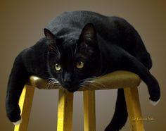 Batcat by Tom Buchanan - Batcat Photograph - Batcat Fine Art ...
