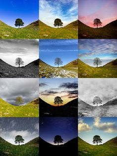 Don't forget about 'me' time. I once walked to Sycamore Gap on Hadrian's Wall every month and took a photo of it for a full year. This tree featured in Robin Hood: Prince of Thieves.