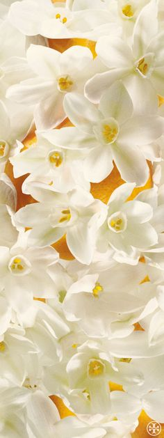 Neroli, a citrus note from Tory's first fragrance