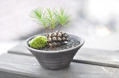 「木の実 発芽」の画像検索結果