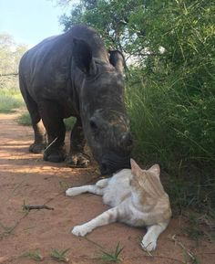 Meet Mewie the cat and Nandi the orphaned rhino!