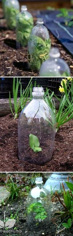 greenhouses made from plastic bottles