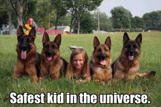 The German Shepherd Dog Community. Animal Jokes, Funny Animal Memes, Dog Memes, Cute Funny Animals, Funny Animal Pictures, Cute Baby Animals, Dog Pictures, Funny Cute, Funny Dogs