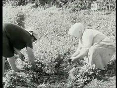 """1967 """"sapore di Puglia"""" documentario sui prodotti alimentari, agricoli e sulla cucina pugliese"""
