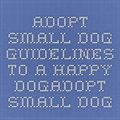 Adopt Small Dog - Guidelines to a happy dogAdopt Small Dog