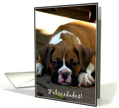 Felicidades, Boxer Spanish greeting cards  #boxer #dog #greeting #cards #congratulations