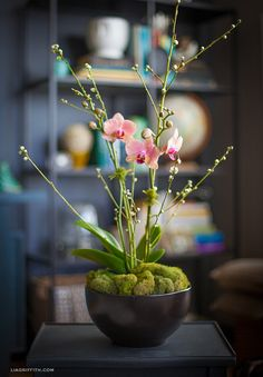 How to Style an Orchid Plant