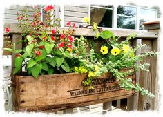 Cool old tool box with chain handle makes a great annuals planter off a deck