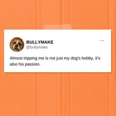 Honestly probably how I'm going to go out 🤷 Funny Dog Pictures, Funny Dogs, Photo And Video, Sayings, Jasper, Instagram, Funny Dog Photos, Lyrics, Quotations