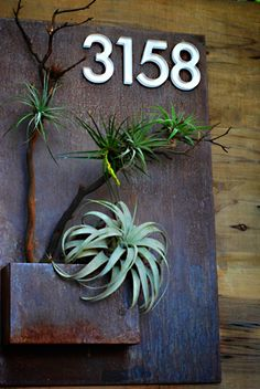 22 awesome diy modern address plate design ideas - Room a Holic Dream Garden, Garden Art, Home And Garden, Air Plants, Indoor Plants, Potted Plants, Indoor Garden, Outdoor Gardens, Decoration Entree