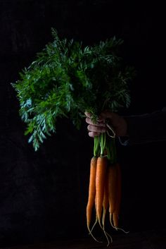 Baby Carrots... #foodphotography #photography #stilllife #foodstyling #carrot #vegetable