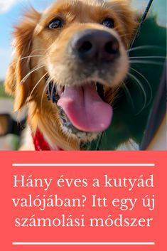 Nem kell szorozni a kutyusod éveit. Dogs, Animals, Animales, Animaux, Pet Dogs, Doggies, Animal, Animais