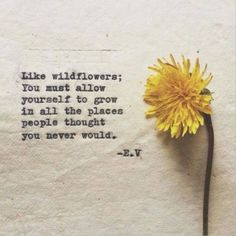 POWERFUL selection of the best People change quotes are insightful statements which give you both deep understanding and motivation you need. The Words, Cool Words, Wild Flower Quotes, Flower Qoutes, Flower Sayings, Wild Quotes, Sun Quotes, Flower Crown Quotes, Yellow Flower Quotes