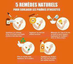 Les 5 remèdes naturels contre les piqûres d'insectes à l'efficacité redoutable.
