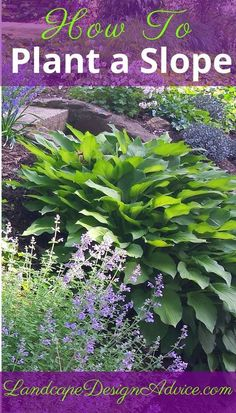 Steep Slopes How do you plant a slope? Use colorful, textured, drought tolerant plants in masses. Find out more here.How do you plant a slope? Use colorful, textured, drought tolerant plants in masses. Find out more here. Hillside Garden, Garden Shrubs, Diy Garden, Shade Garden, Lawn And Garden, Sloping Garden, Backyard Shade, Garden On A Hill, Garden Bar
