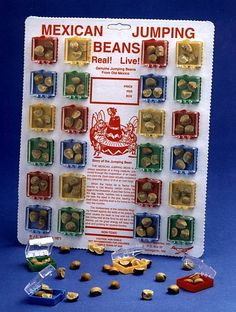 """""""MEXICAN JUMPING BEANS"""", man does this take me back to a magical time. Not really a jumping bean at all, but a cute little insect in side.. The warmer your hands were, the more they would pop and jump, simply amazing kids for a rather high price in the day of 55.¢…"""