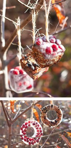 DIY Birdseed Ice Ornaments, wonder if using lard or something similar since it doesn't stay cold enough here?