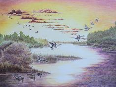 Colored Pencil Painting of Northern Pintails on the river at sunset