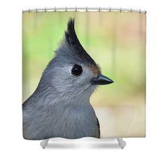 Debra Martz Shower Curtain featuring the photograph Portrait Of A Black-crested Titmouse by Debra Martz