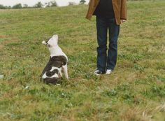Well-behaved dogs are a joy to share your life with. Follow this dog training program for six weeks and see improved behavior in your dog.