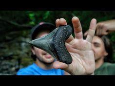 Sanibel Island Shells, Megalodon Shark, Fossil Hunting, A Beast, Beach Trip, Fossils, Teeth, Rings For Men, Florida