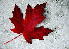 happy canada day wishes wallpapers , canada day greetings with canada flag hd images Happy Birthday Canada, Happy Canada Day, Maple Leaf Tattoos, Canadian Tattoo, Canada Maple Leaf, Canadian Maple, Canadian Flags, Canadian Girls, Red Pictures