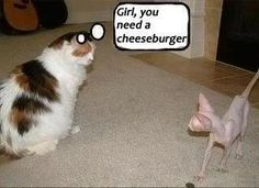 girl, you need a cheeseburger! My cats would totally say this!