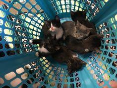 Basket full of kittens! 💖