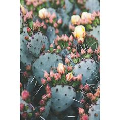 Cactus Photography, Bohemian Print, Southwest Print, Desert art, Boho... ❤ liked on Polyvore featuring home, home decor, wall art, photographic wall art, pink poster, pink flamingos poster, photography posters and cactus poster