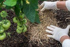 Organic Mulch, Organic Compost, Organic Gardening, Gardening Tips, Container Gardening, Garden Weeds, Water Garden, Le Baobab, Gardens
