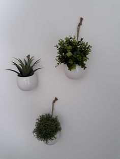 plant wall, small plants