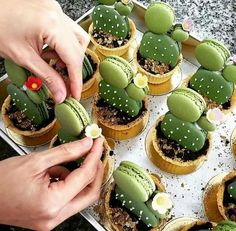 Have any green macarons on hand? Try out these adorable cacti macaron tarts by… Just Desserts, Dessert Recipes, Green Desserts, Macaroon Recipes, Drink Recipes, Dinner Recipes, Tasty, Yummy Food, Yummy Yummy