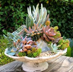 I wish I could find a Pinterest profile for The Succulent Porch, but pinning these pics I found on their Facebook because they are so gorgeous!