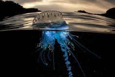 """Jellyfish. Australian photographer Matty Smith's """"Over/Under"""" photo series explores a variety of underwater sea life in their natural habitats, and takes its name from the series' unique dual perspective of above and below sea level."""