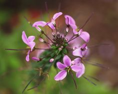 https://flic.kr/p/N3Jdqd | Pretty in purple | ...........
