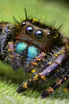 spider. I think it's really cute!