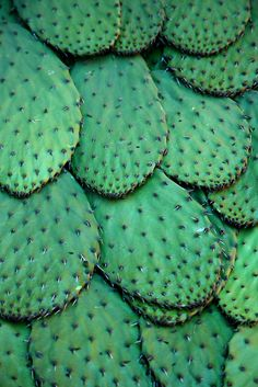 TEXTURE: this picture shows the surface of a cactus. It has a sleek, smooth texture with spikes on top. Patterns In Nature, Textures Patterns, In Natura, Cactus Y Suculentas, Cacti And Succulents, Belle Photo, Shades Of Green, Green Colors, Color Inspiration
