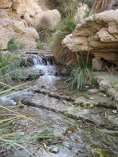 En Gedi near the Dead Sea