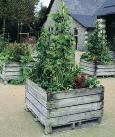 """wooden box pot At the annual Festival des Jardins, the garden festival held at the Château de Chaumont in France's Loire Valley one of the Kitchen Gardenting plots was this raised bed planter made from old pallets! Pinned to """"It's a Pallet Jack"""" by Pamela Pallet Garden, Plants, Outdoor, Pallets Garden, Outdoor Gardens, Diy Raised Garden, Garden Containers, Backyard, Kitchen Garden"""